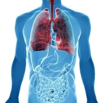 b2ap3_thumbnail_lungs.JPG