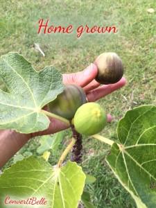 hm grown figs