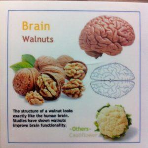 walnut - brain