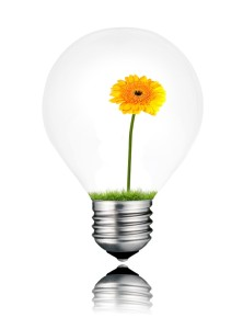 Light Bulb with Yellow Gerbera Flower Growing Inside Isolated