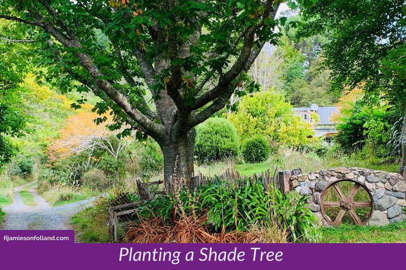 Planting a Shade Tree